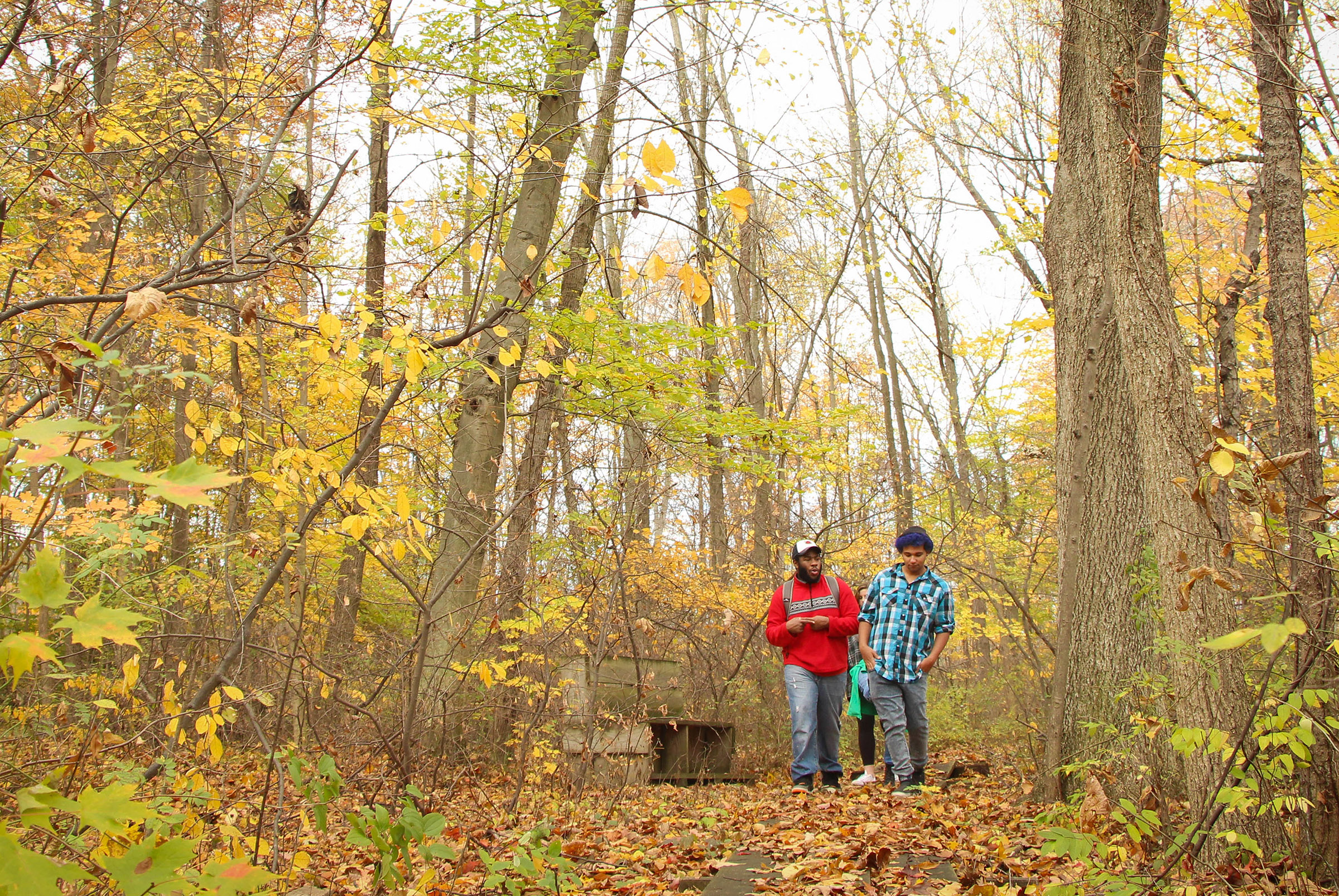 Students hiking the trail in autumn.